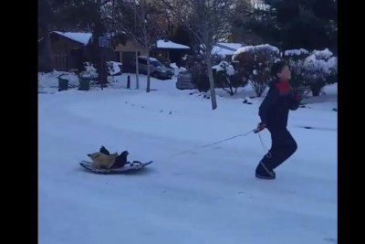 Portland boy celebrates snow day by pulling chickens through street in a sled