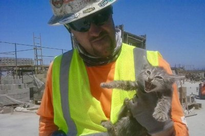 'Chapo' the kitten rescued from inside wall of jail construction site