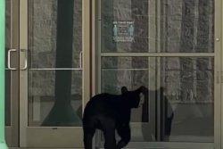 Bear visits Tennessee mall, checks movie showtimes