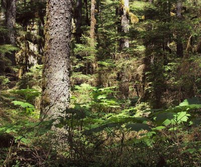 Trump administration proposes increasing logging in Tongass National Forest