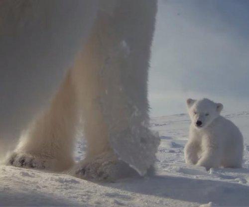 Polar bear finds spy camera, films cub, takes selfie
