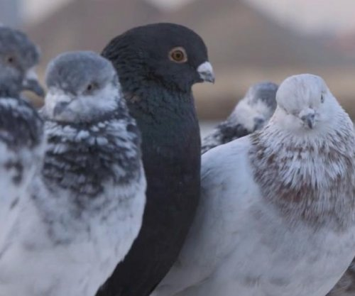 2,000 pigeons to fly over East River fitted with LED lights