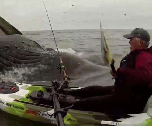 Kayaker has close encounter with pair of humpback whales