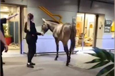 Stray mule wanders into airport terminal in Israel