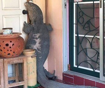 Giant monitor lizard pays visit to Thai family's front door
