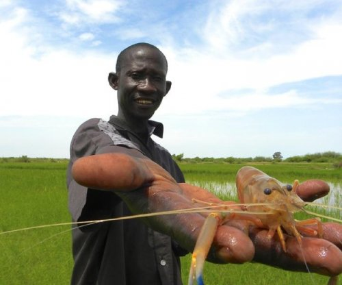 Predatory prawns aid fight against parasitic flatworm