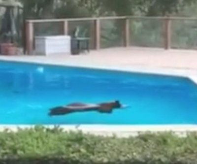 Bear goes for summer swim in California family's pool