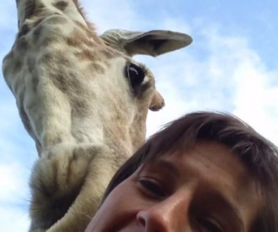 Friendly giraffe interrupts woman's selfie video in South Africa