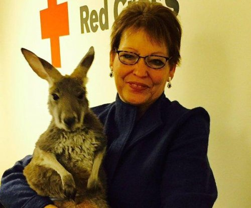 Utah Red Cross honors therapy kangaroo for work with veterans