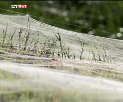 Memphis neighborhood taken over by millions of spiders