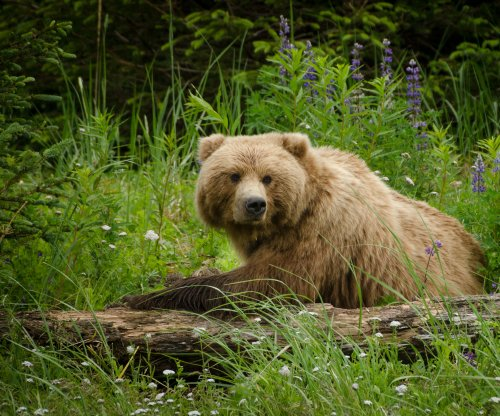 Grizzly kills cyclist on Montana trail