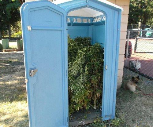 'Pot'-a-potty: Oregon man finds portable toilet full of marijuana plants