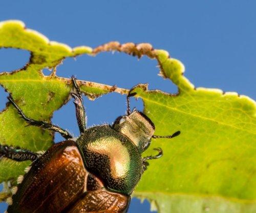 Biodiversity is a natural crop pest repellent