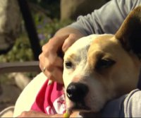 Massachusetts woman reunited with missing dog after 5 years