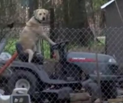 Texas news team interrupted by lawn-mowing dog