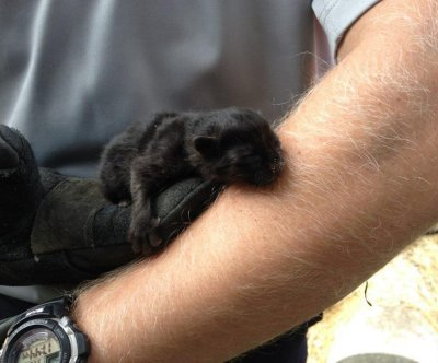 Michigan firefighters rescue newborn kitten from concrete culvert