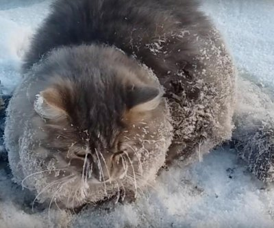 Cat stuck in ice puddle rescued in Russia