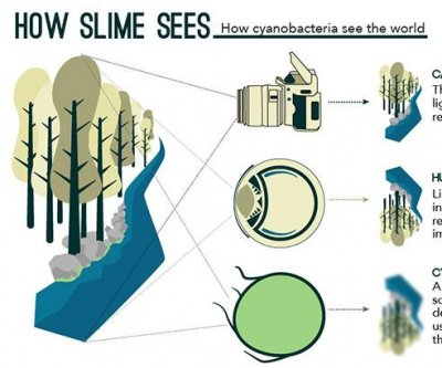 Slime that can see: Bacterium acts like a single-cell eye