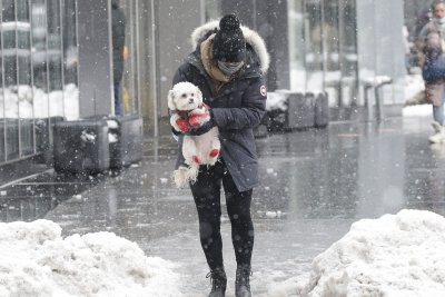 Northeast snow totals: NYC, Philly above average this year; D.C. well below