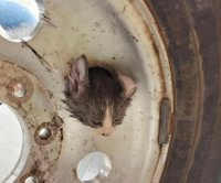 Firefighters rescue kitten with head stuck through wheel lug hole