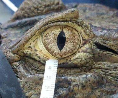Bird, reptile tears similar to human tears, study says