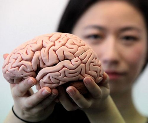 Brains lose firmness as they age, researchers say