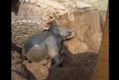 Baby elephant rescued from 30-foot deep well