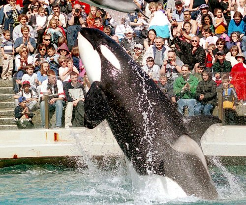 Seaworld to start phasing out killer whale show at San Diego park