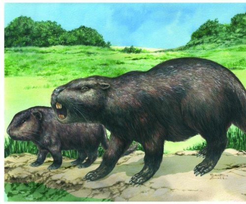 Rare giant rodent fossils cause family tree shakeup