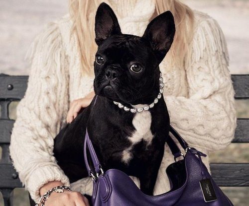 Lady Gaga's dog stars in new Coach campaign