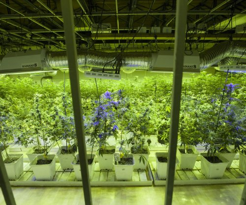 Northern Michigan University begins nation's first medical marijuana degree program