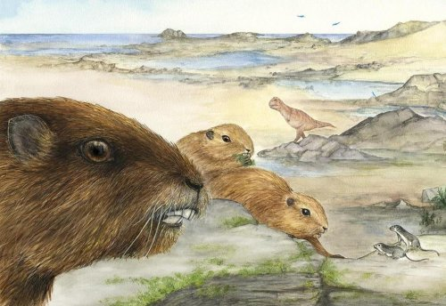 Fossil in Madagascar offers clues to evolution of early mammals