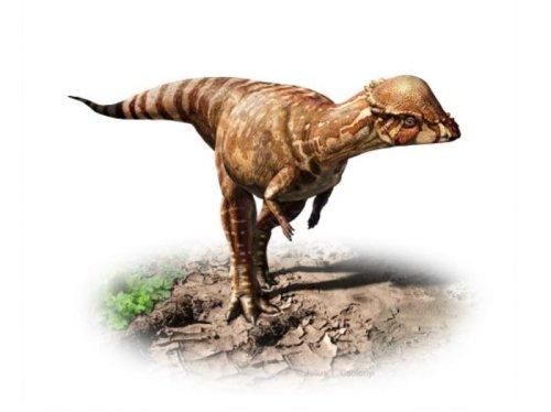 Paleontologists identify new species of 'bone-headed' dinosaur