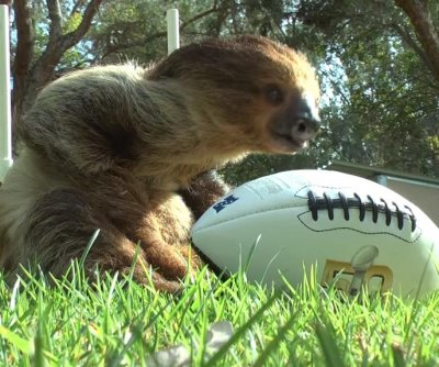 No need for slow-mo: California theme park hosts 'First Ever Sloth Bowl'