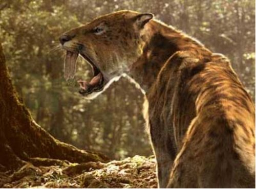 Saber-tooth cat fossil found in Nevada