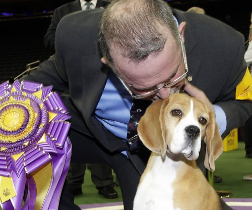 Westminster Kennel Club names beagle Miss P Best in Show