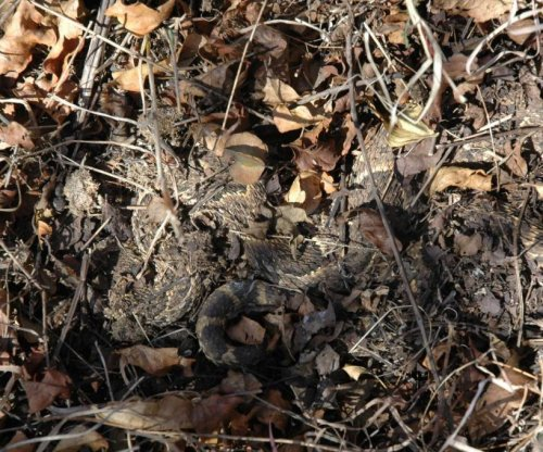 African puff adder uses chemical camoflauge to hide scent
