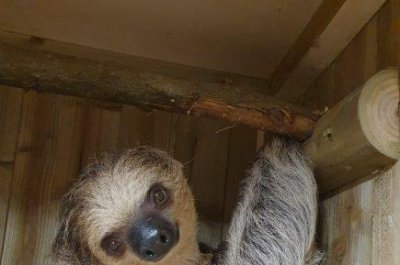 Zoo's sloths appear to kiss on camera in first encounter
