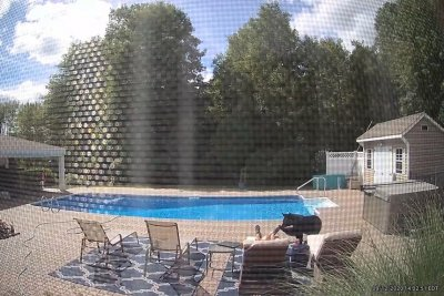 Watch: Bear nudges Massachusetts man napping by backyard pool