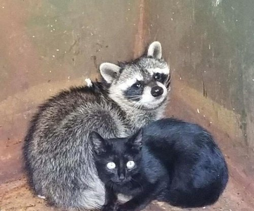Tennessee police find kitten, raccoon cuddling in dumpster