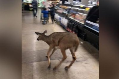 Deer runs through grocery store in Indiana