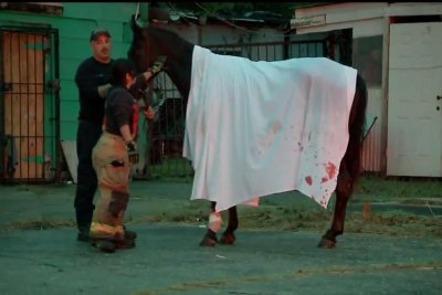 Horse rescued from 6-foot septic hole in Texas