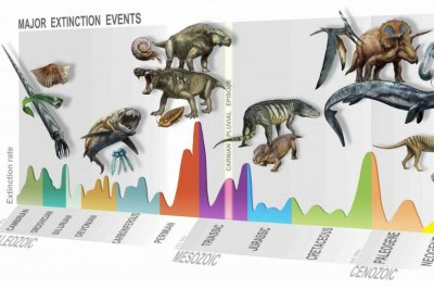 Paleontologists find evidence of new mass extinction 233 million years ago