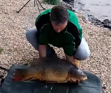 Huge carp escapes fisherman, flaps its way to freedom