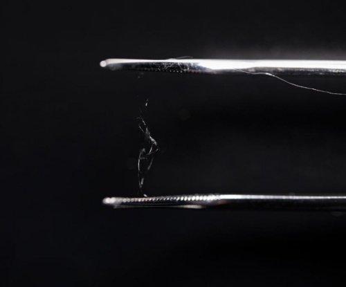 Spider silk, wood combination replicates material advantages of plastic