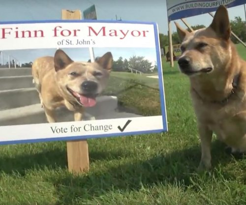 Finn the dog runs for mayor of Canadian town