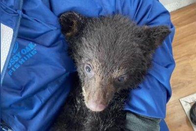 Wisconsin couple helps rescue swimming bear cub in Alaska