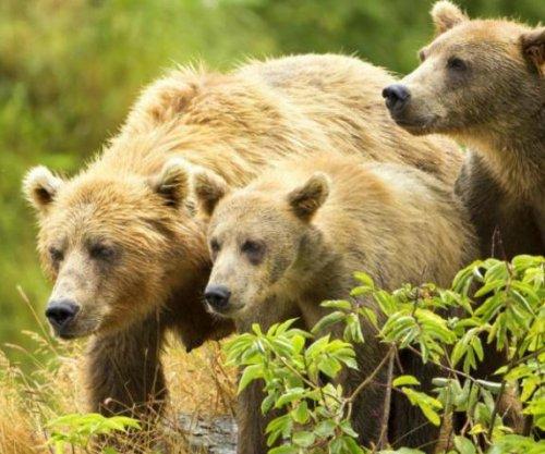 Ecologists: Alaska wildlife management threatens state's largest carnivores