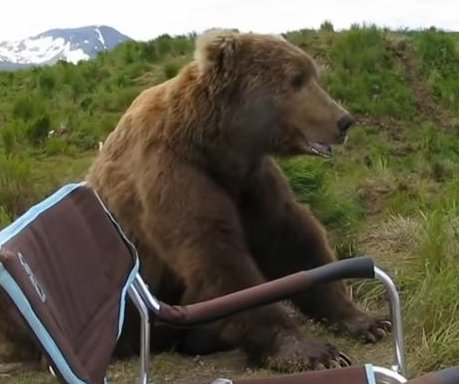 Bear sits down next to Alaska photographer to watch nature