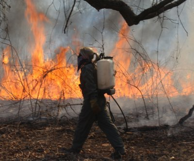 Study: Insect outbreaks actually reduce wildfire severity